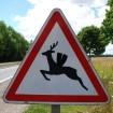 panneau danger cerf volant