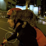 cat bike by night