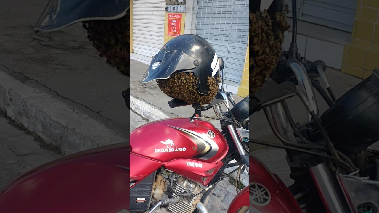 un essaim d 39 abeilles dans un casque de moto motard geek. Black Bedroom Furniture Sets. Home Design Ideas