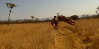 cycliste vs antilope