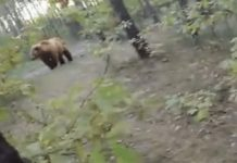 cycliste vs ours
